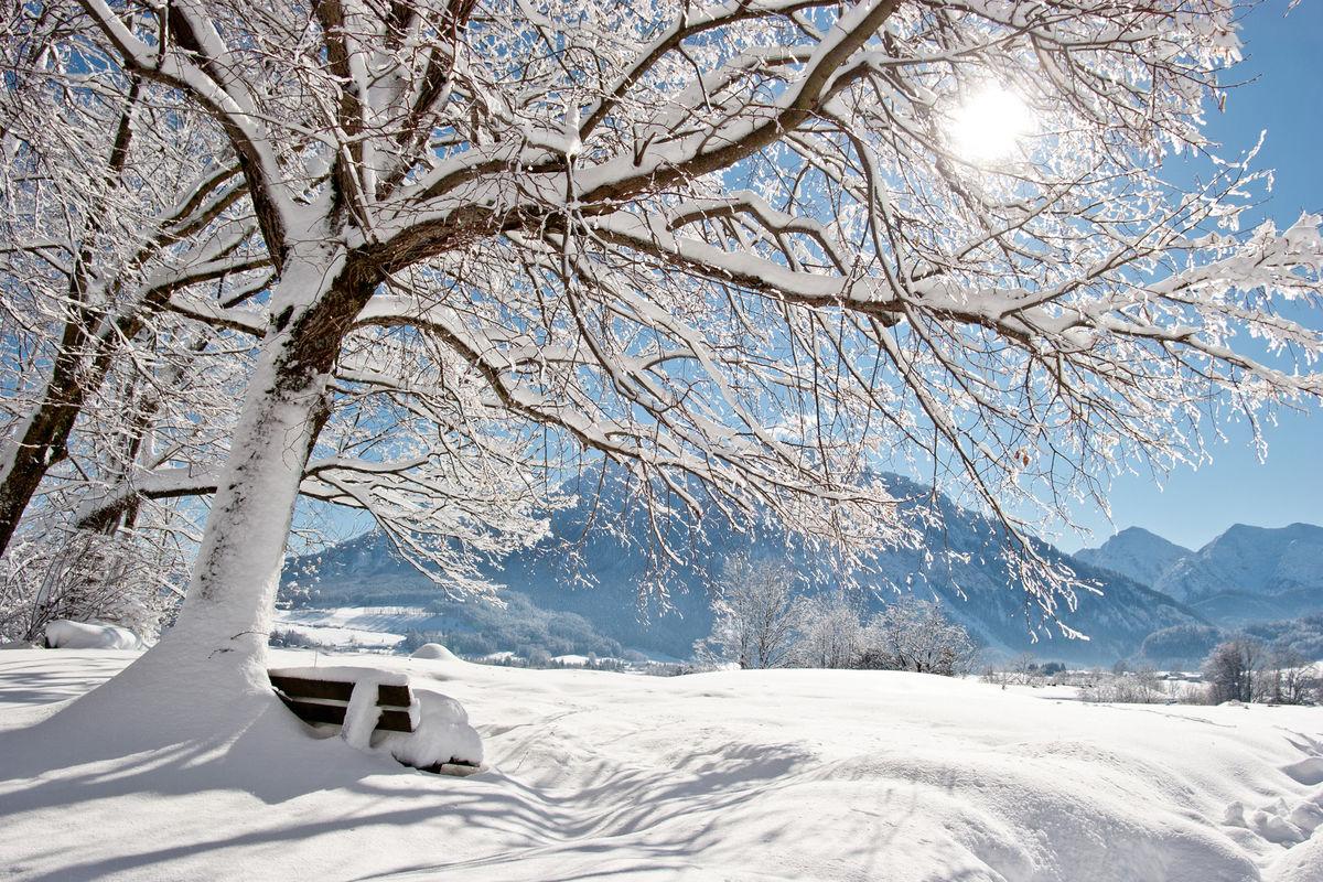 Winter04.jpg